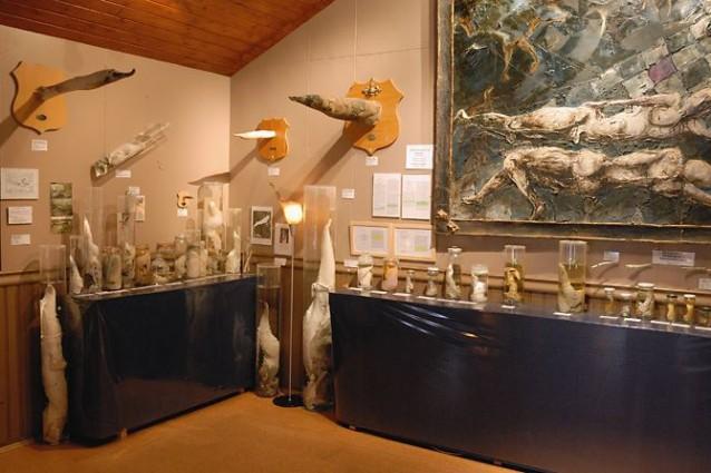 museo-pene
