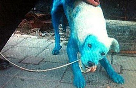 Teppisti pitturano di vernice blu un cane.