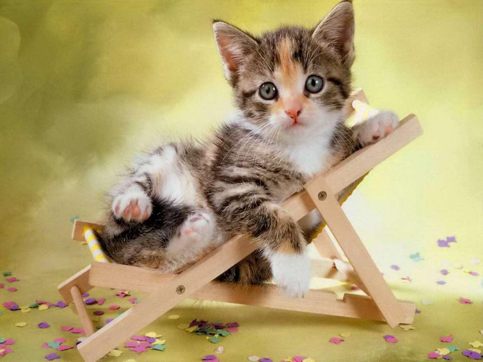 Il gatto pi intelligente del web roba da donne - Come fare il bagno al gatto ...
