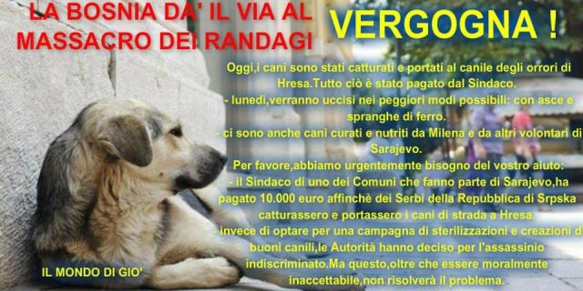 Bosnia: il massacro dei cani randagi. Come aiutare i nostri amici a quattro zampe
