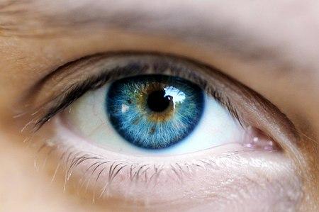 Un solo antenato per tutti quelli con gli occhi azzurri