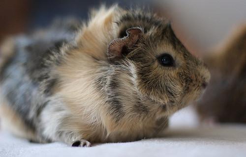 Stop ai test sugli animali: da marzo il divieto definitivo