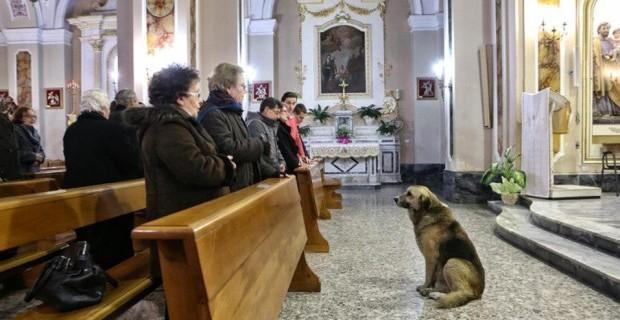 Tommy, il cane che aspettava la sua padrona in chiesa è morto