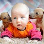 Gli animali possono essere un utile strumento sociale nella lotta ad importanti patologie!