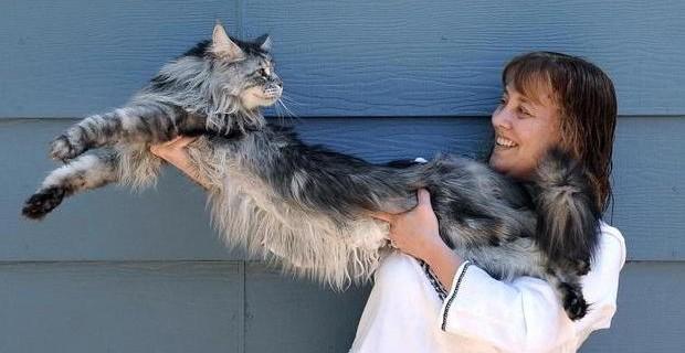 gatto-lungo