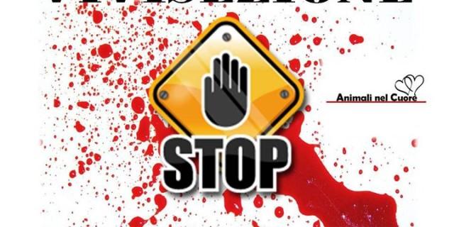 stop-vivisezione