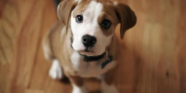 Sei Pronta Per Avere Un Cucciolo? Rispondi A Queste 9 Domande - Roba da Donne