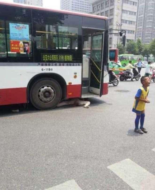 nonna-autobus