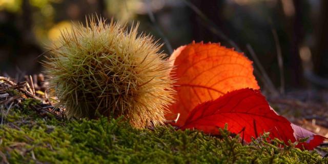 6 mosse intelligenti per affrontare l'autunno