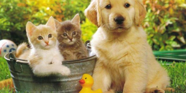 Cane o gatto? Il profilo psicologico di chi sceglie questi animali.