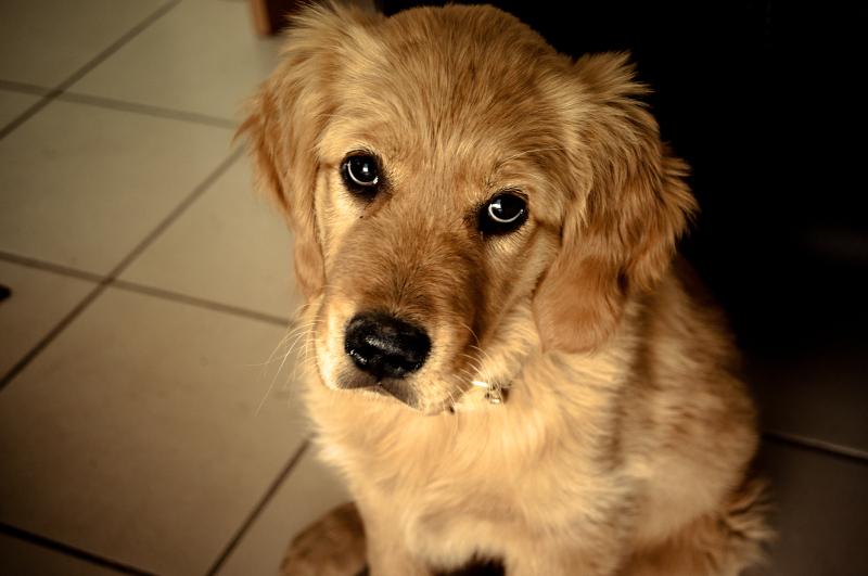 Perch adottare un cane importante il video che - Colorazione immagine di un cane ...