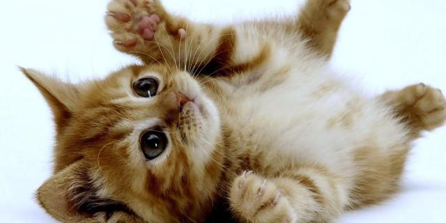 Come i gatti vedono il nostro mondo. [FOTO]