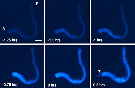 Scienziato fotografa la morte: luce bianca che invade il corpo.