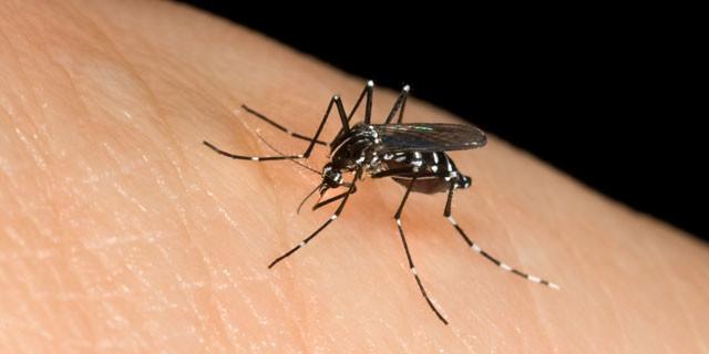 12 rimedi naturali e fai da te contro le punture di zanzara.