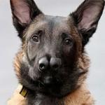Snuffles, il cane con due nasi abbandonato 5 volte.