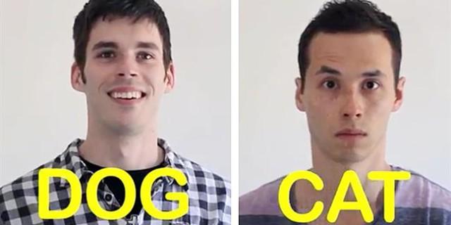 Cane Vs Gatto Il Video Più Divertente Per Gli Amanti Degli Animali