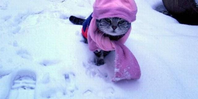 Il freddo aiuta a dimagrire