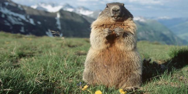 Giornata della marmotta: l'inverno sarà ancora lungo.