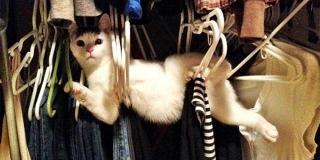 Cani e gatti vs mobili: una lotta impari [FOTO]