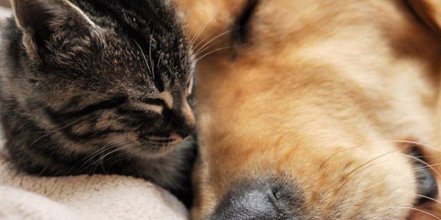 Cuccioli Di Cane E Gatto Uccisi Per La Ricerca Video Shock Video