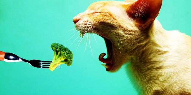 Le 27 Domande Più Frustranti Alle Quali Un Vegetariano Deve Abituarsi
