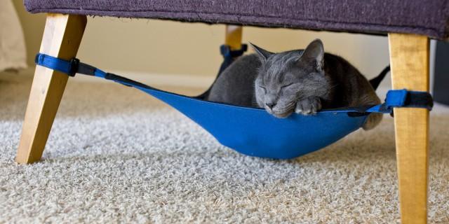 15 Divertentissimi Giochi per il vostro Gatto che vorrete Assolutamente [FOTO]