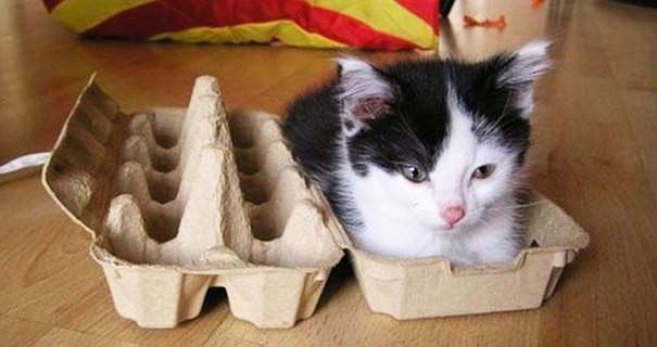21 Gatti Che Inspiegabilmente Amano Infilarsi In Spazi Strettissimi