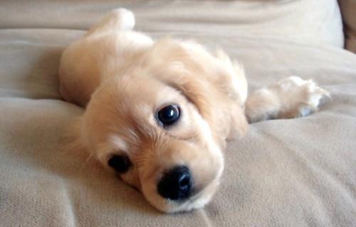 Sei Pronta Per Avere Un Cucciolo? Rispondi A Queste 9 ...