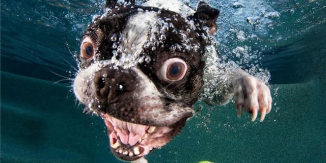 13 Incredbili Fotografie Che Mostrano La Reazione Dei Cani All'Acqua