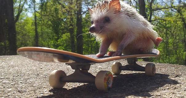 22 Esilaranti Foto Di Animali Che Fanno Cose Da Umani