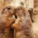 Anche Gli Animali Si Baciano: 30 Foto Che Vi Faranno Impazzire