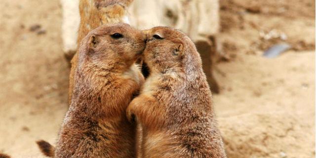 Anche gli animali si baciano 30 foto che vi faranno impazzire roba da donne - Persone che fanno l amore in bagno ...