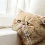 Cosa Fanno I Gatti Quando Sono Soli A Casa? Aspettano Te! [Foto]