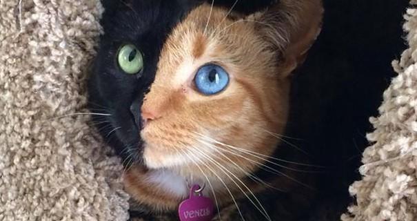Il Gatto Con Due Facce Più Bello Del Mondo [FOTO]