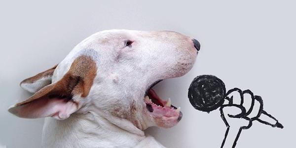 Jimmy Choo: Il Cane Più Amato Di Instagram [FOTO]