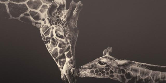 10 Fotografie Di Animali Allo Zoo: Leggete Le Loro Emozioni?
