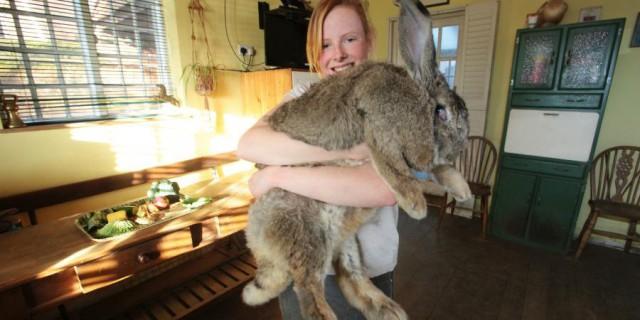 I 13 Conigli Più Strani Del Mondo [FOTO]