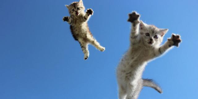 Divertentissimi Gatti Che Saltano Come Dei Veri Ninja [FOTO]
