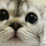 Cosa Cercano Di Comunicarci Gli Animali Con I Loro Gesti