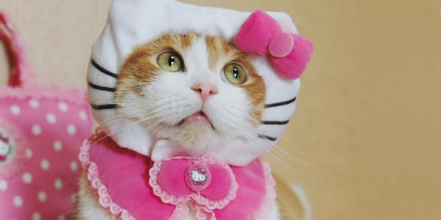 14 Folli Curiosità Su Hello Kitty (Che Non è Nemmeno Un Gatto!)