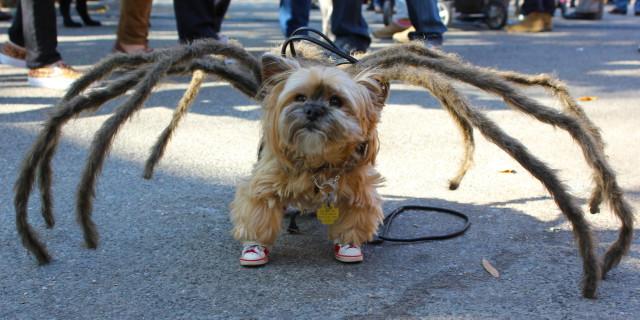 Halloween: 29 Idee Terribilmente Carine Per I Nostri 4 Zampe
