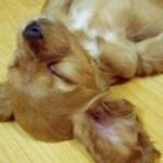 20 Cani Che Dormono In Posizioni Assurde