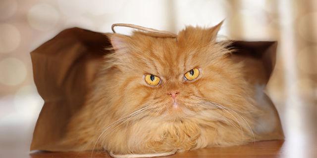 Garfi, Il Gatto Più Arrabbiato Del Web [FOTO]