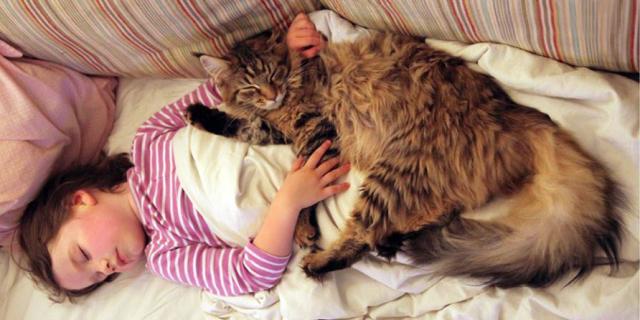 La Storia Di Una Bambina Autistica E Del Suo Gatto Terapeutico