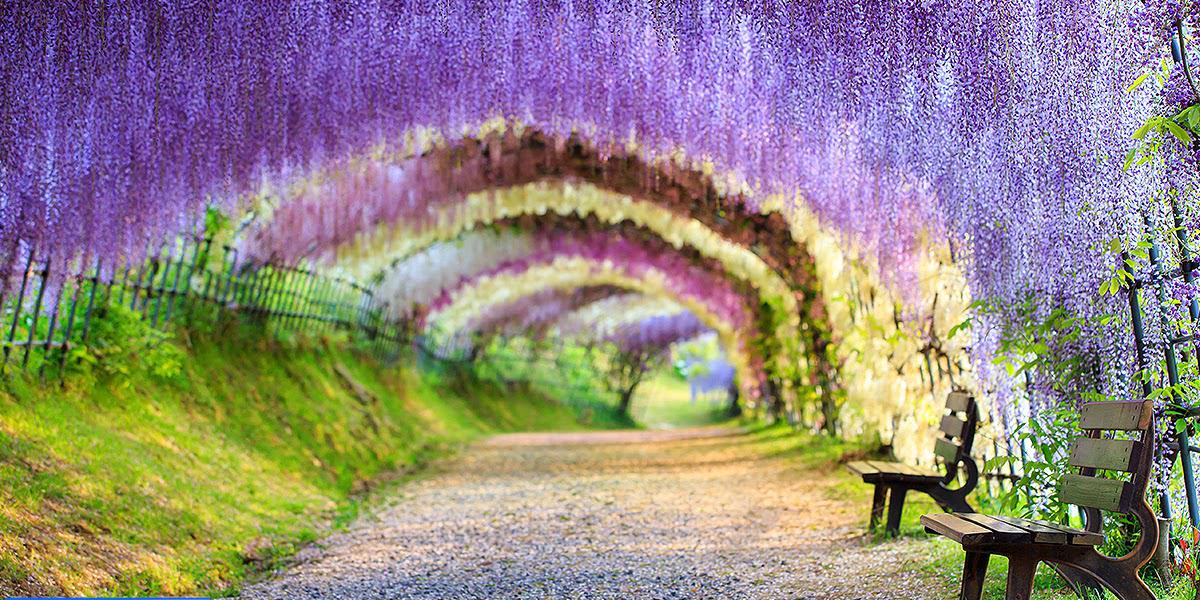15 posti mozzafiato da visitare almeno una volta nella - Giardini fantastici ...