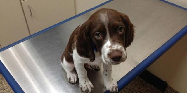 Le Buffe Reazioni Dei Cuccioli Che Hanno Paura Del Veterinario
