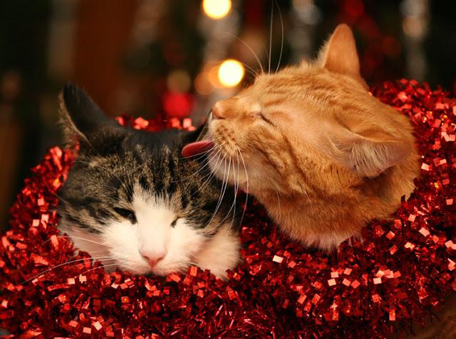 Come Evitare Che Il Gatto Rovini Lalbero Di Natale
