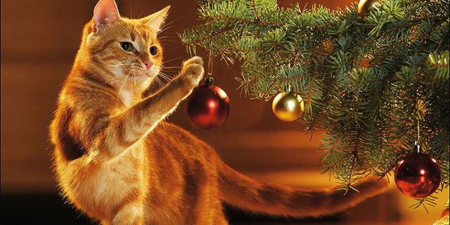 Natale: come Salvare l'Albero dal Gatto e il Gatto dall'Albero