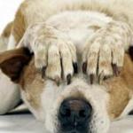 Animali e Botti di Capodanno: Come Proteggere i Nostri Amici