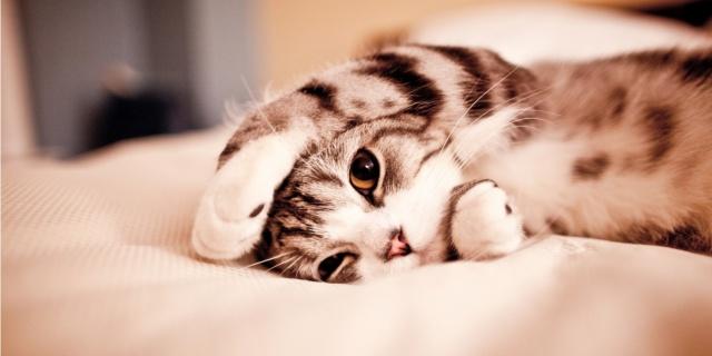 16 Curiosità sui Gatti che Nessuno ti ha Mai Detto